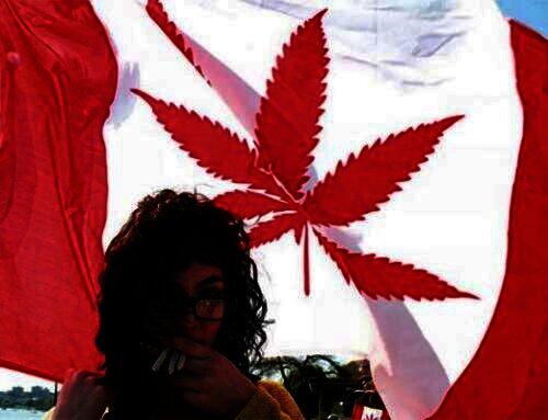 Canadese startup komt met marihuana blockchain systeem